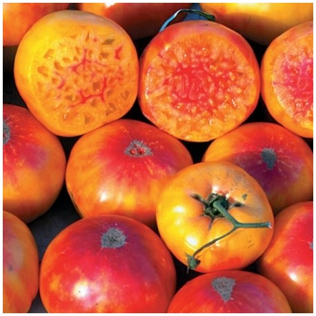 Graines Tomate ancienne 'Hillbilly' seeds