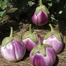 Aubergine Rotonda bianca sfumata di rosa (aubergine ronde)