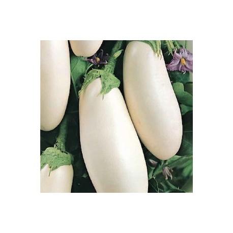 Aubergine Clara F1 (aubergine blanche)