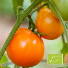 Tomate Valencia BIO