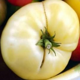 Tomate 'White Wonder Beefsteak'