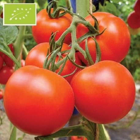 Graines Tomate Royale des Guineaux