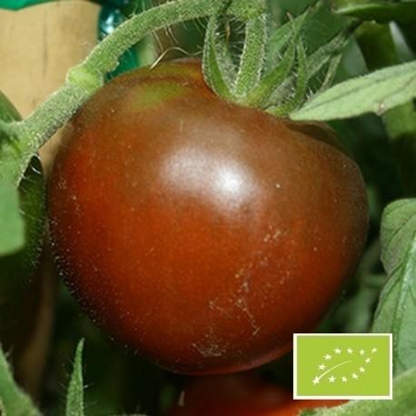 Tomate Black Prince BIO (tomate ancienne)
