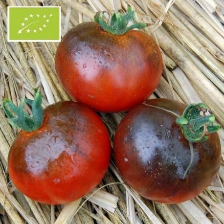 Tomate Blue Streak BIO