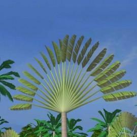 Ravenala Madagascariensis (Palmier du voyageur)