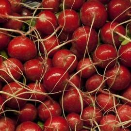 Graines Radis rouge 'Scarlet Globe'