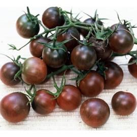 Graines Tomate cerise 'Black Cherry' seed