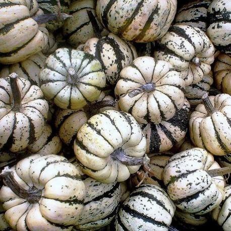 Graines Courge 'Sweet Dumpling' (Patidou)