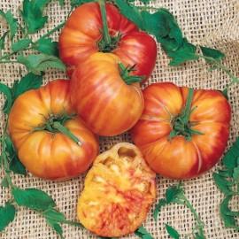 Graines Tomate ancienne bigarée 'Big rainbow'