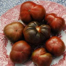 Tomate Brandywine Black (tomate ancienne)