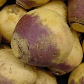Graines Rutabaga 'American Purple Top' (Choux Siam)
