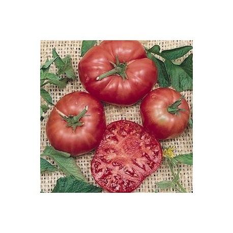 Graines Tomate ancienne 'Brandywine Red'
