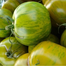 graine de tomate ancienne Green Zebra