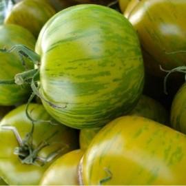 Tomate Green Zebra (tomate ancienne)