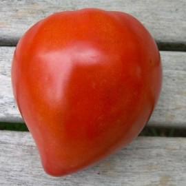 Tomate ancienne 'Coeur de boeuf'