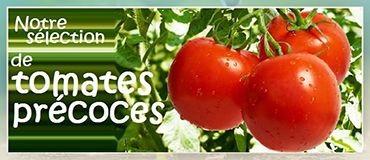 Notre sélection de tomates précoces
